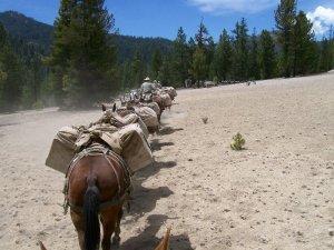 Mule_train