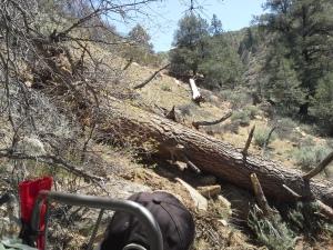 Down Tree on 33E20