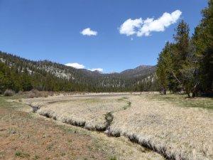 Salt Lick Meadow