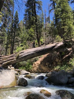 RedwoodCrossing_July12019